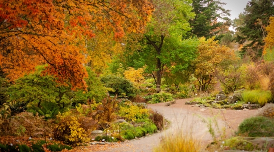 Botaniska trädgården i Göteborg med fika/måltid efteråt 9 oktober