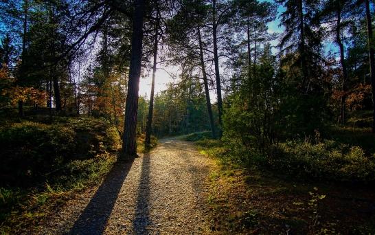 Heldagsvandring i Tyresta Nationalpark. Stockholm 25/10