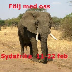 sydafrika 2